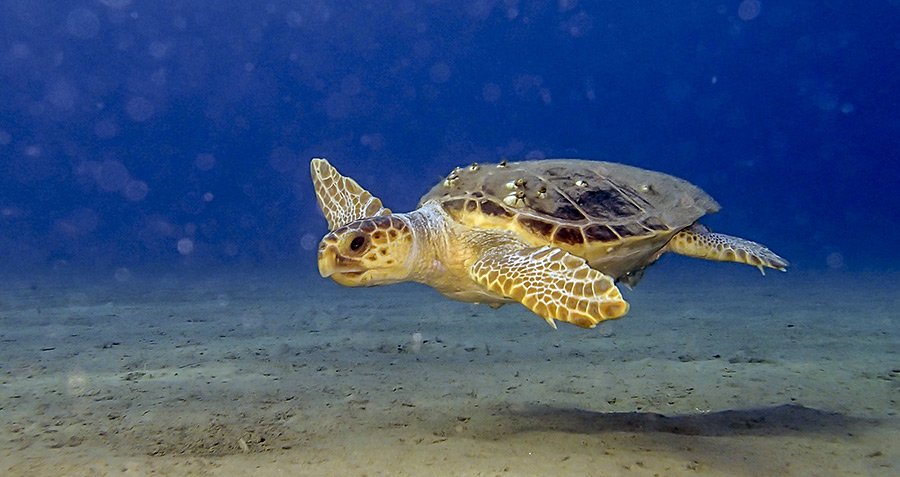 welcometozante parco marino tartaruga caretta