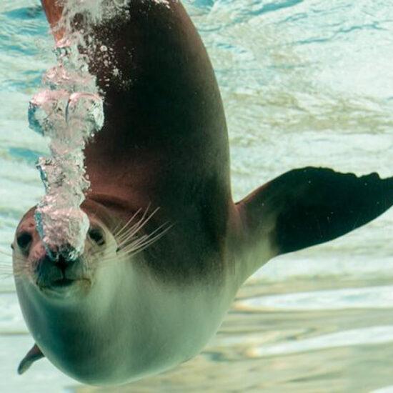wycieczka marine park ekonomiczny wynajem lodzi