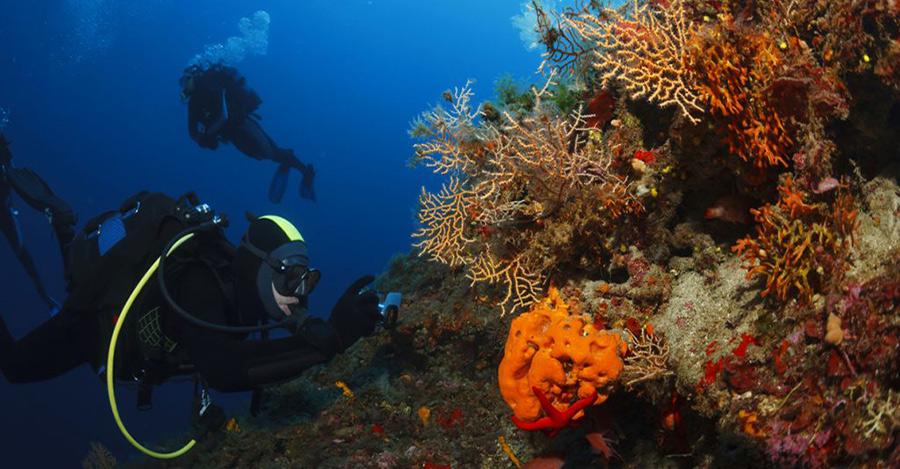 Immersioni subacquee grecia zante advanced diver