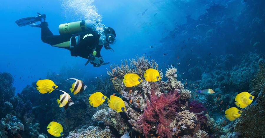 Immersioni subacquee grecia zante adventure diving