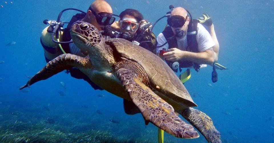 diving in zante