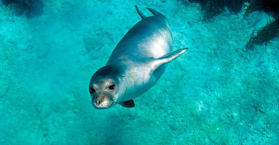 marine park monk seal mediterranean