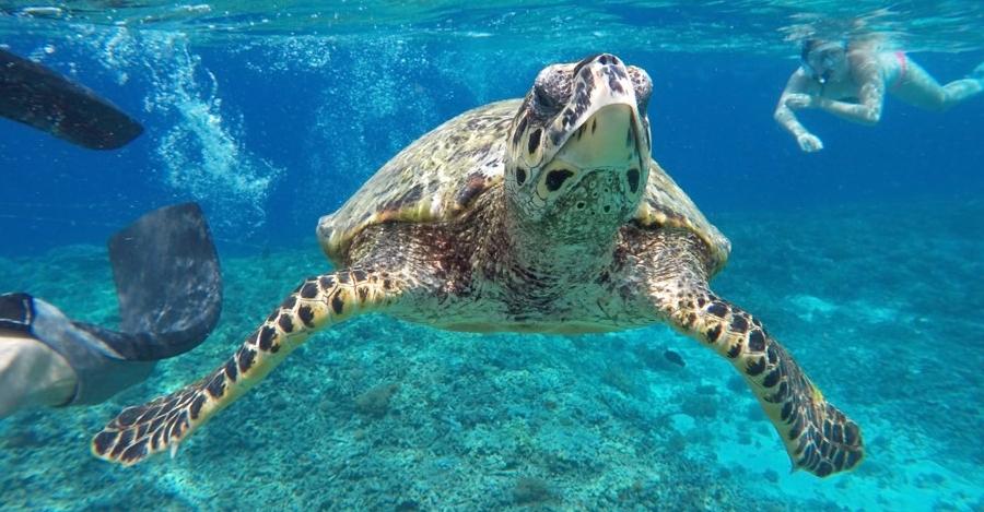 Snorkeling con le tartaruga Caretta Caretta a Zante