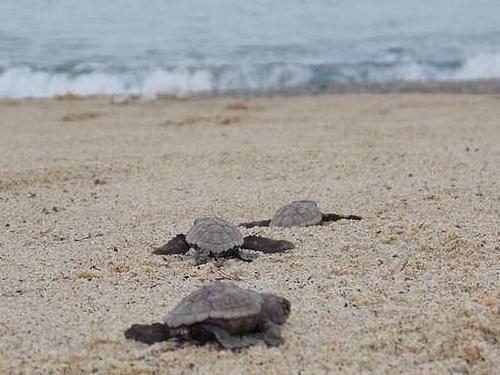 turtles Vasilikos Zante Zakynthos